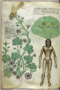 la aromaterapia en la antiguedad
